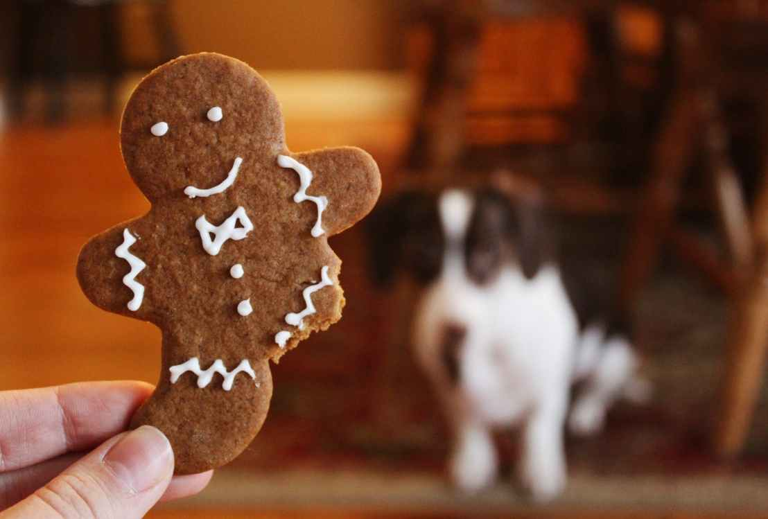 close up photography of gingerbread
